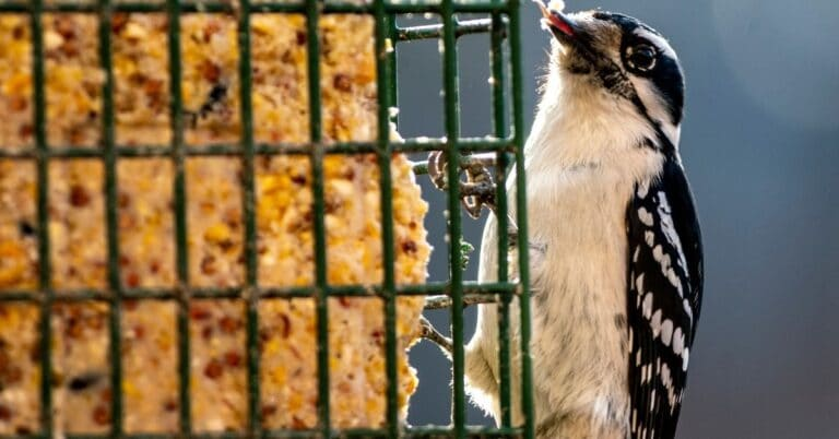 10 Best Suet Cakes For Birds That Actually Work In 2021