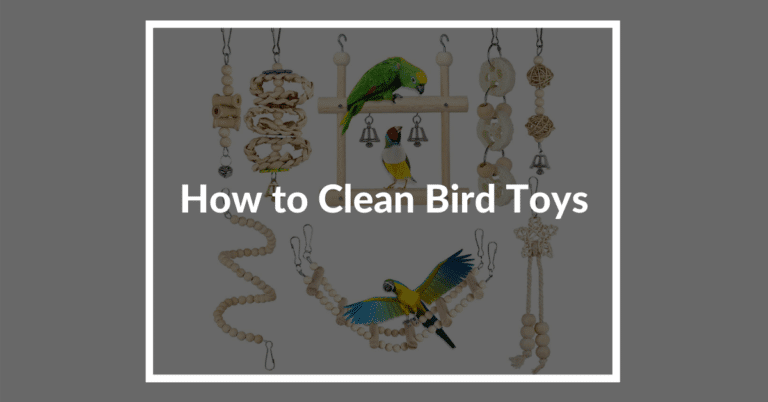 How to clean bird toys: Important Steps