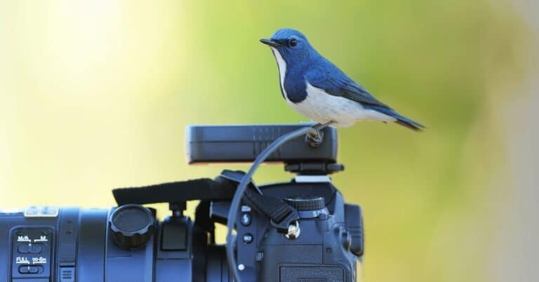 7 Best Camera for Bird Photography in 2021