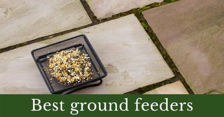 3 Best Ground Feeders for Birds: Complete Guide
