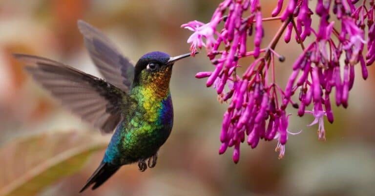 How to Attract Hummingbirds to Your Yard: Guide