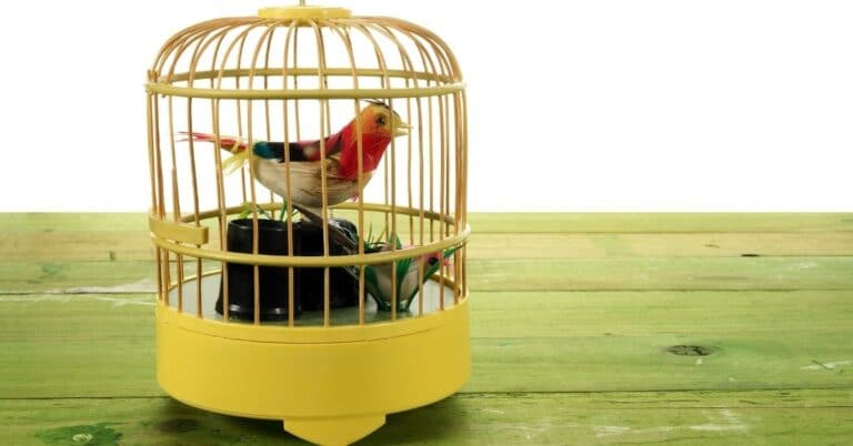 How to make bird toys out of household items: Guide