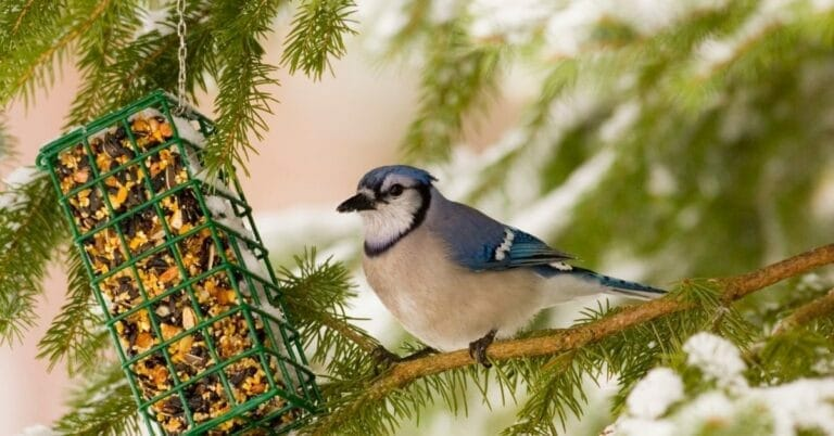 Best Suet Feeders in 2021 and Beyond