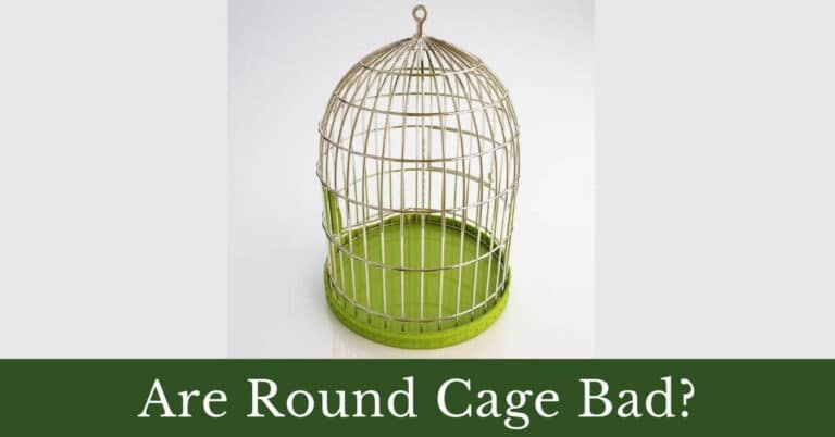 Are round cages bad for birds?