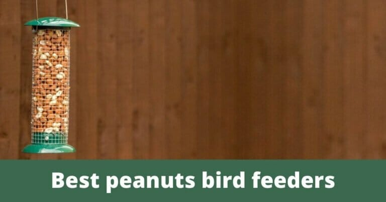 Best bird feeder for peanuts – Reviews & Guide