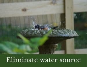 Eliminate water source