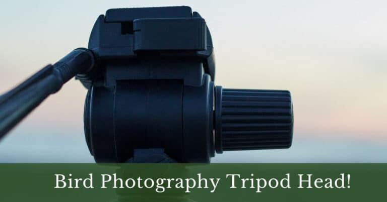 4 Best Tripod Head for Bird Photography In 2021