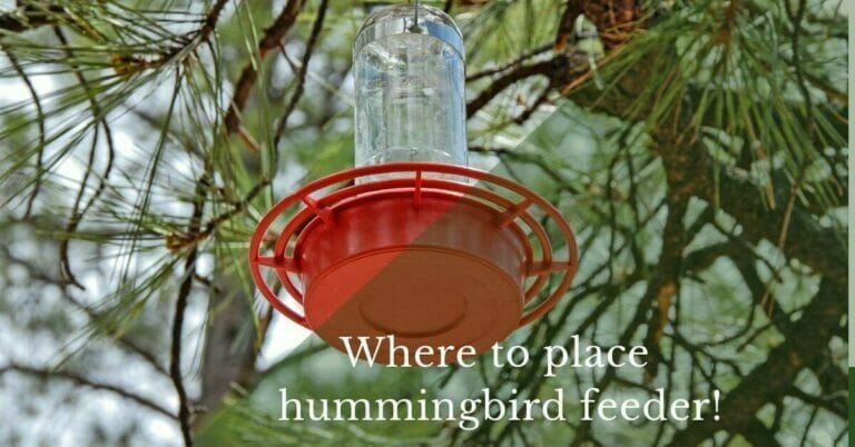 What is the best place to put a hummingbird feeder?