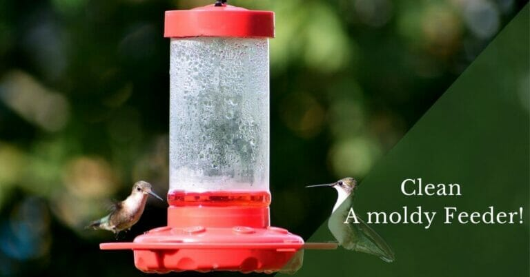 How to clean mold from inside hummingbird feeder?