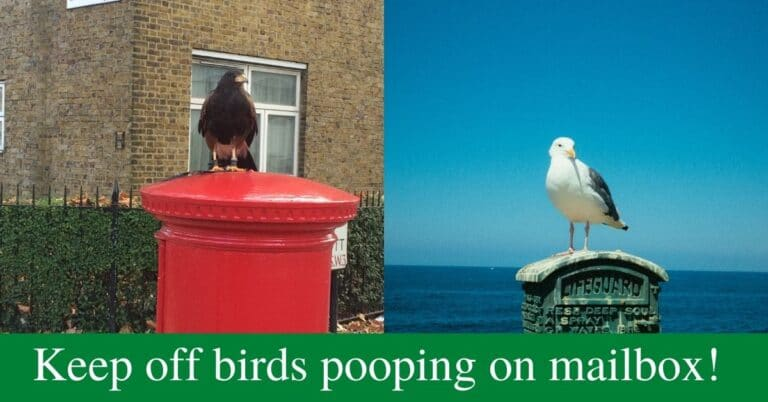 How Do I Keep Birds From Pooping On My Mailbox?
