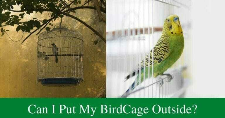 Can I put my bird cage outside?