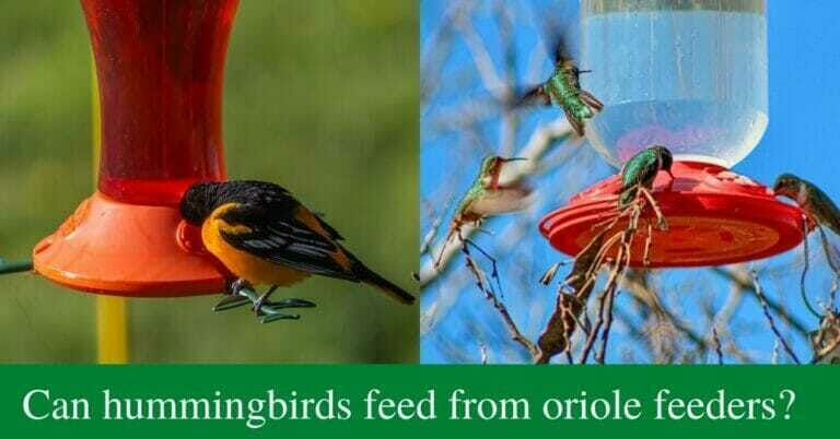 Can hummingbirds feed from oriole feeders?